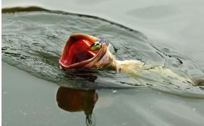路亚仿生假鱼饵超声波焊接